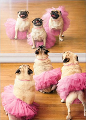 Pug Tutu Front At Wholly Frap
